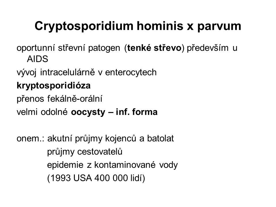 Cryptosporidium hominis x parvum oportunní střevní patogen (tenké střevo) především u AIDS vývoj intracelulárně v enterocytech kryptosporidióza přenos