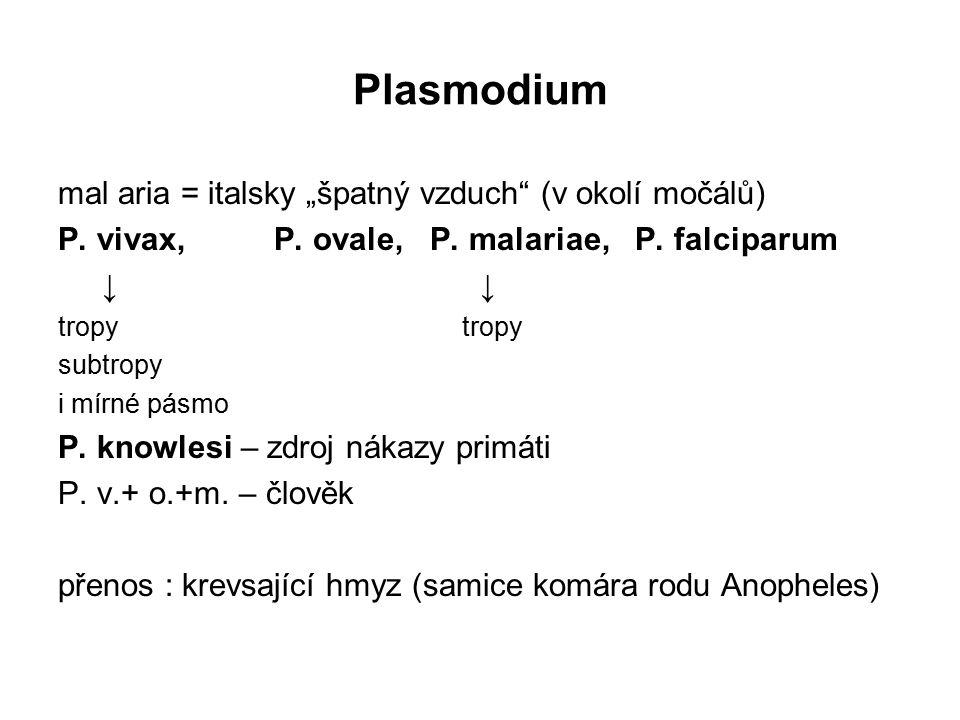 """Plasmodium mal aria = italsky """"špatný vzduch"""" (v okolí močálů) P. vivax, P. ovale, P. malariae, P. falciparum ↓ ↓ tropy subtropy i mírné pásmo P. know"""
