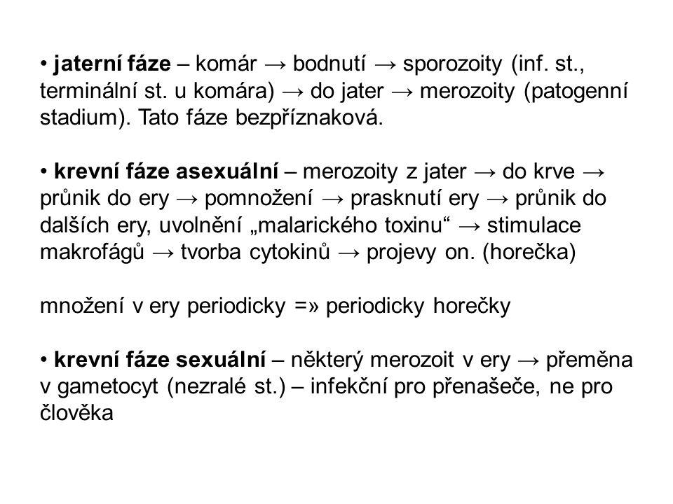 jaterní fáze – komár → bodnutí → sporozoity (inf. st., terminální st. u komára) → do jater → merozoity (patogenní stadium). Tato fáze bezpříznaková. k