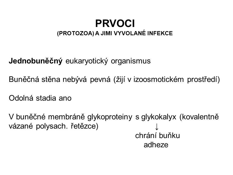 PRVOCI (PROTOZOA) A JIMI VYVOLANÉ INFEKCE Jednobuněčný eukaryotický organismus Buněčná stěna nebývá pevná (žijí v izoosmotickém prostředí) Odolná stad