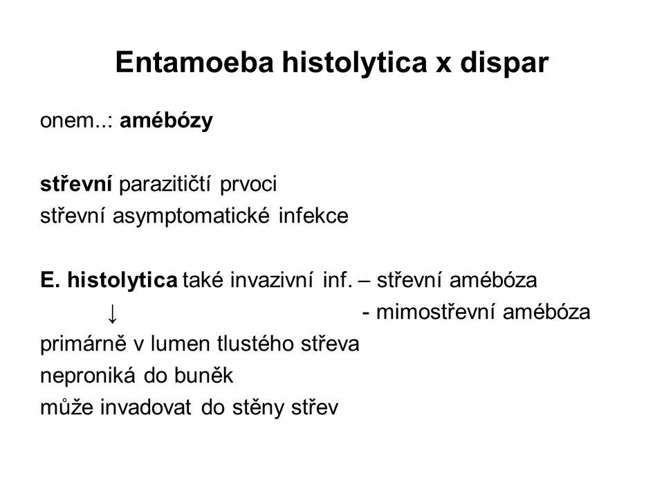 Entamoeba histolytica x dispar onem..: amébózy střevní parazitičtí prvoci střevní asymptomatické infekce E. histolytica také invazivní inf. – střevní