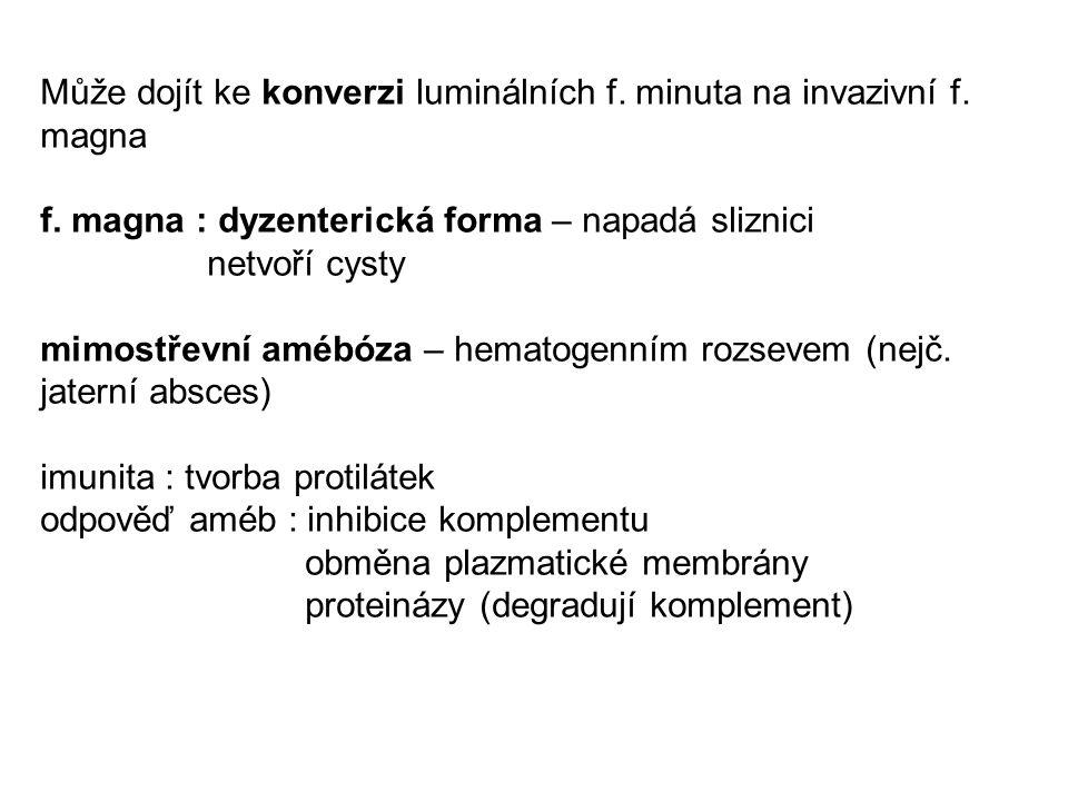 Může dojít ke konverzi luminálních f. minuta na invazivní f. magna f. magna : dyzenterická forma – napadá sliznici netvoří cysty mimostřevní amébóza –