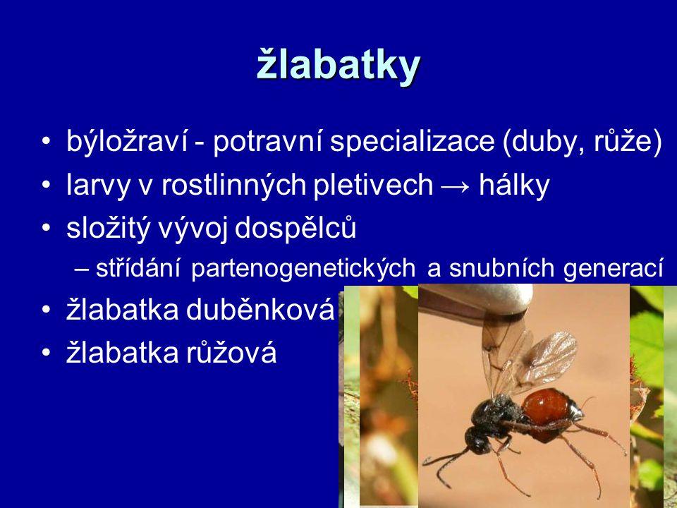 žlabatky býložraví - potravní specializace (duby, růže) larvy v rostlinných pletivech → hálky složitý vývoj dospělců –střídání partenogenetických a sn