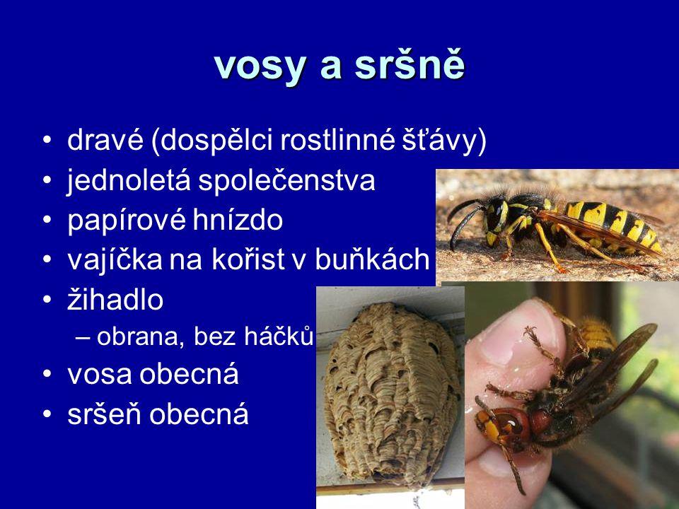 vosy a sršně dravé (dospělci rostlinné šťávy) jednoletá společenstva papírové hnízdo vajíčka na kořist v buňkách žihadlo –obrana, bez háčků vosa obecn