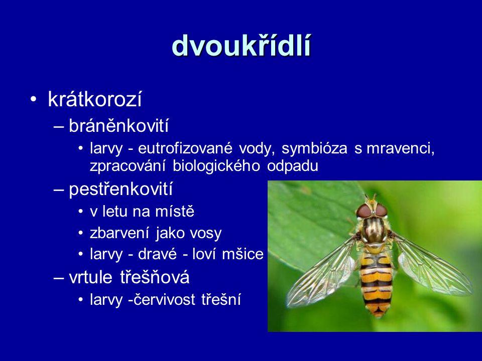 dvoukřídlí krátkorozí –bráněnkovití larvy - eutrofizované vody, symbióza s mravenci, zpracování biologického odpadu –pestřenkovití v letu na místě zba