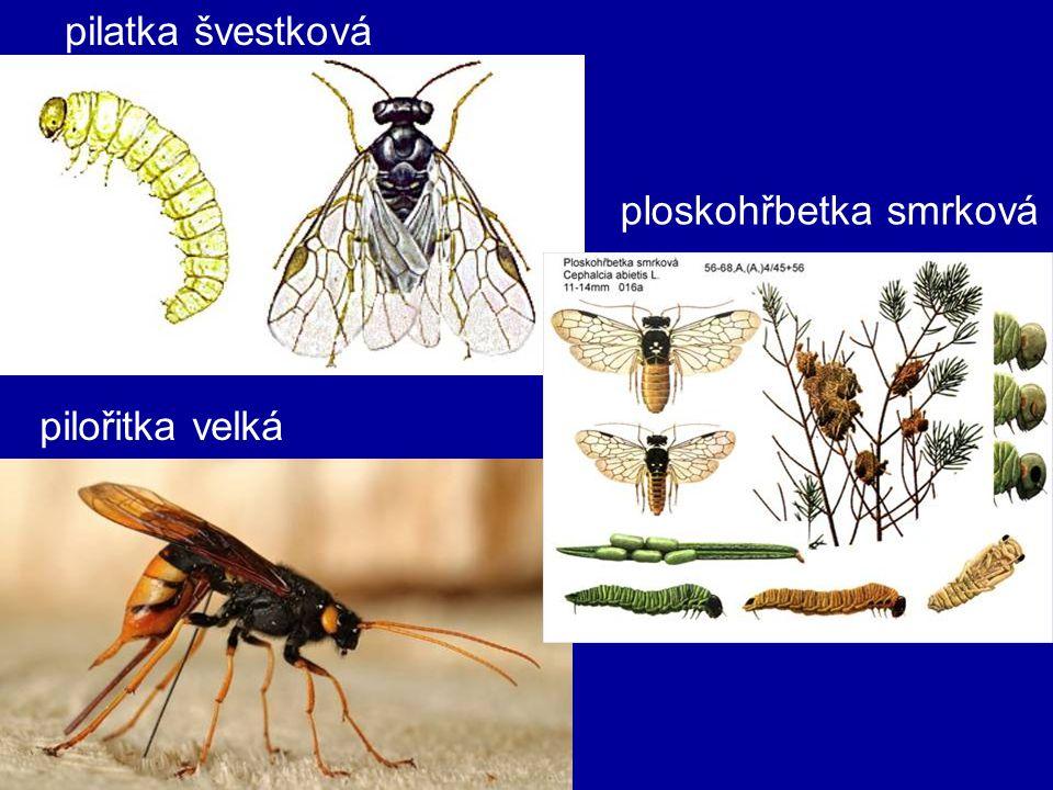 blanokřídlí štíhlopasí –zadeček připojen tenkou stopkou –kladélko, nebo žihadlo –larvy bez nohou i očí –kladélkatí žlabatky, lumci –žahadlovití vosy kutilky, samotářské včely mravenci, vosy a sršně, čmeláci, společenské včely