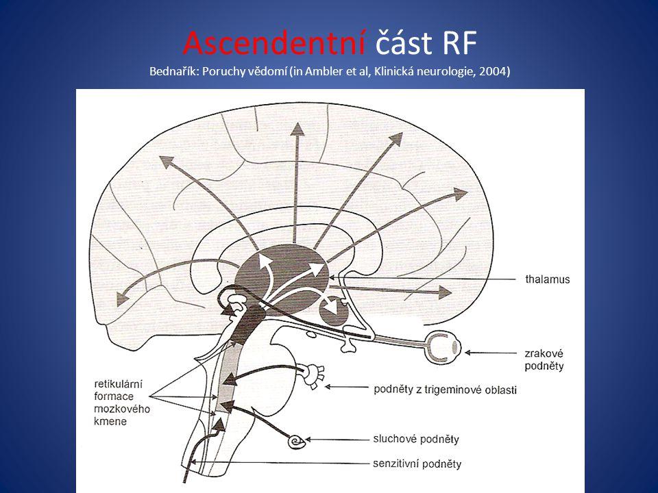 Ascendentní část RF Bednařík: Poruchy vědomí (in Ambler et al, Klinická neurologie, 2004)