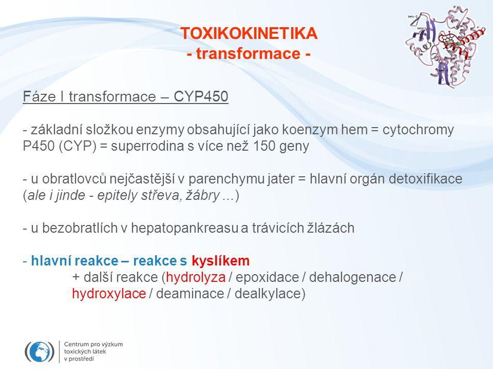 Fáze I transformace – CYP450 - základní složkou enzymy obsahující jako koenzym hem = cytochromy P450 (CYP) = superrodina s více než 150 geny - u obrat