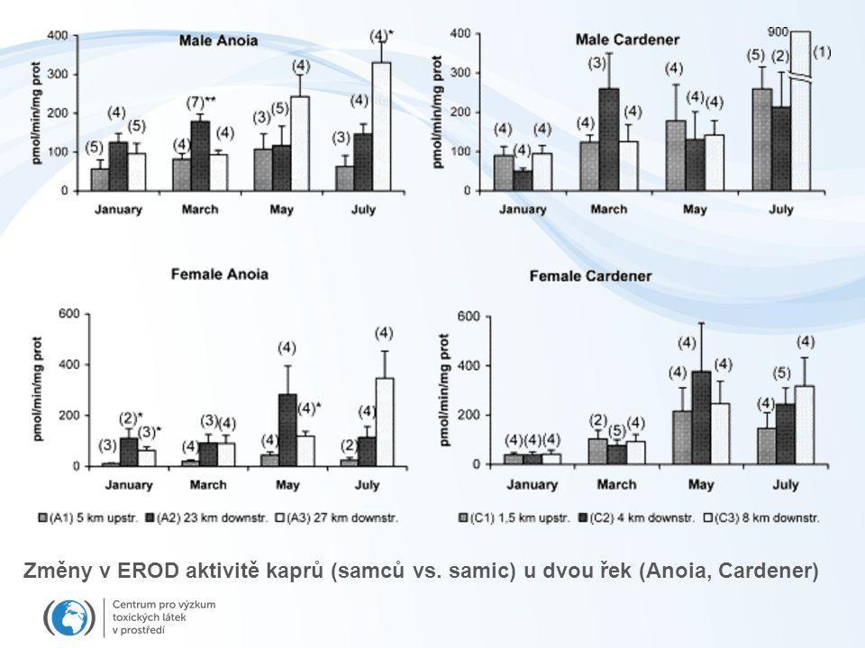 Změny v EROD aktivitě kaprů (samců vs. samic) u dvou řek (Anoia, Cardener)