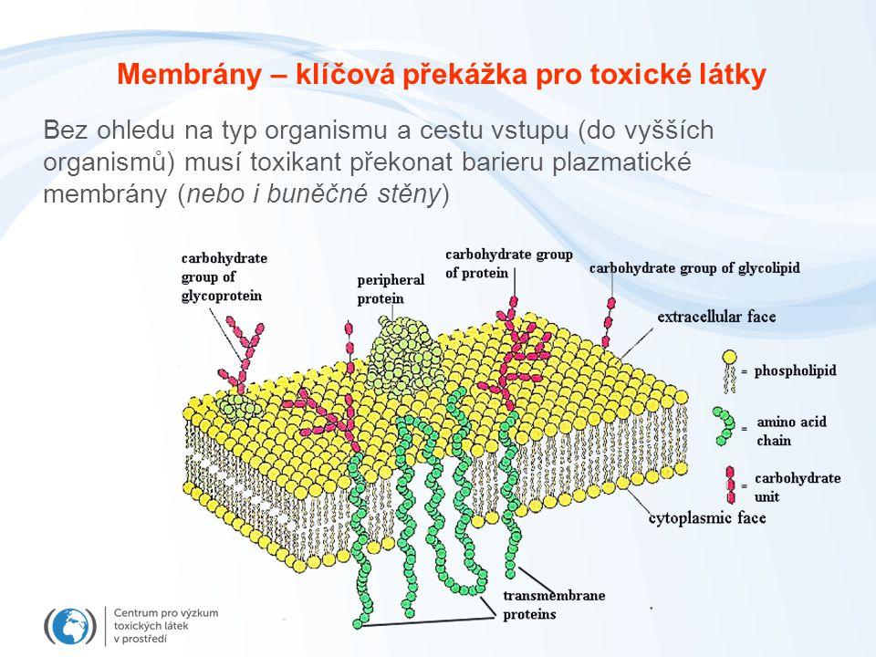 Bez ohledu na typ organismu a cestu vstupu (do vyšších organismů) musí toxikant překonat barieru plazmatické membrány (nebo i buněčné stěny) Membrány