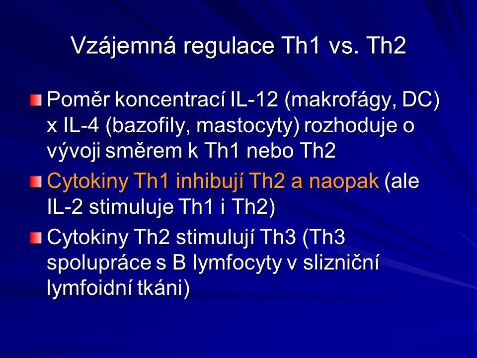 Vzájemná regulace Th1 vs. Th2 Poměr koncentrací IL-12 (makrofágy, DC) x IL-4 (bazofily, mastocyty) rozhoduje o vývoji směrem k Th1 nebo Th2 Cytokiny T