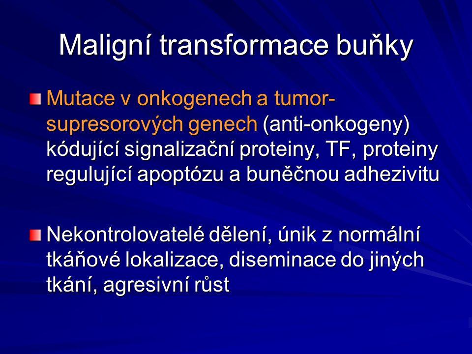 Maligní transformace buňky Mutace v onkogenech a tumor- supresorových genech (anti-onkogeny) kódující signalizační proteiny, TF, proteiny regulující a