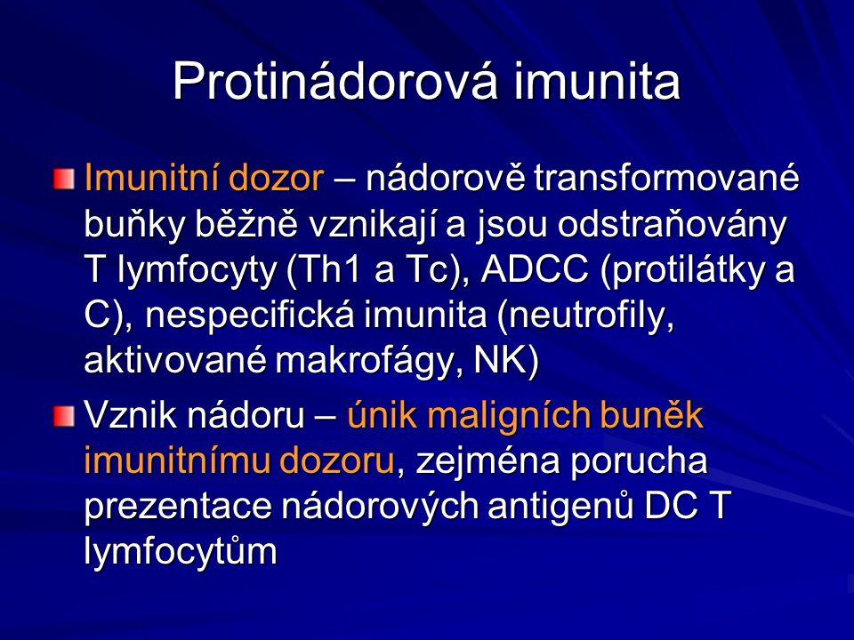 Protinádorová imunita Imunitní dozor – nádorově transformované buňky běžně vznikají a jsou odstraňovány T lymfocyty (Th1 a Tc), ADCC (protilátky a C),