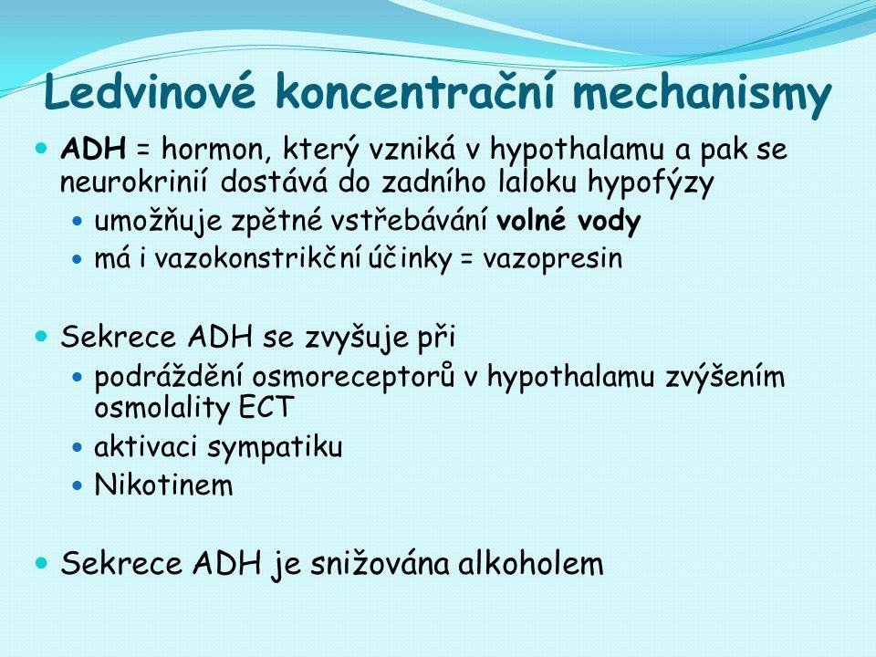Ledvinové koncentrační mechanismy ADH = hormon, který vzniká v hypothalamu a pak se neurokrinií dostává do zadního laloku hypofýzy umožňuje zpětné vstřebávání volné vody má i vazokonstrikční účinky = vazopresin Sekrece ADH se zvyšuje při podráždění osmoreceptorů v hypothalamu zvýšením osmolality ECT aktivaci sympatiku Nikotinem Sekrece ADH je snižována alkoholem