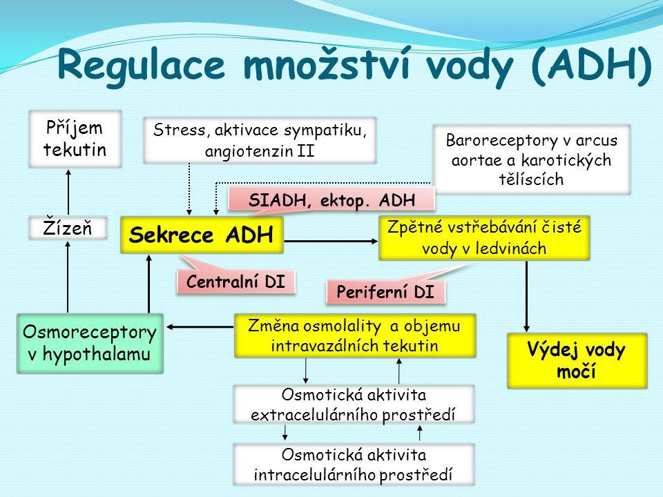 Regulace množství vody (ADH) Osmoreceptory v hypothalamu Sekrece ADH Zpětné vstřebávání čisté vody v ledvinách Výdej vody močí Baroreceptory v arcus aortae a karotických tělíscích Osmotická aktivita extracelulárního prostředí Osmotická aktivita intracelulárního prostředí Žízeň Změna osmolality a objemu intravazálních tekutin Stress, aktivace sympatiku, angiotenzin II Příjem tekutin SIADH, ektop.