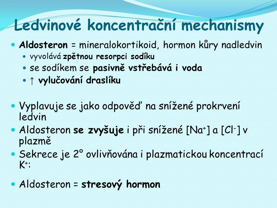 Ledvinové koncentrační mechanismy Aldosteron = mineralokortikoid, hormon kůry nadledvin vyvolává zpětnou resorpci sodíku se sodíkem se pasivně vstřebává i voda ↑ vylučování draslíku Vyplavuje se jako odpověď na snížené prokrvení ledvin Aldosteron se zvyšuje i při snížené [Na + ] a [Cl - ] v plazmě Sekrece je 2° ovlivňována i plazmatickou koncentrací K + : Aldosteron = stresový hormon