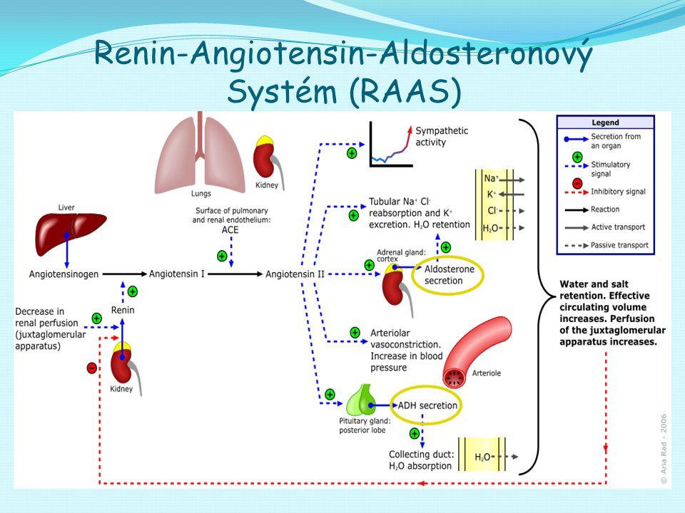 Renin-Angiotensin-Aldosteronový Systém (RAAS)