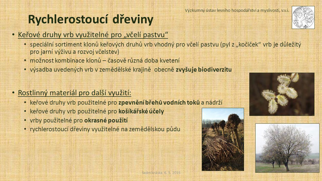 """Sedmikráska, 6. 5. 2015 Výzkumný ústav lesního hospodářství a myslivosti, v.v.i. Rychlerostoucí dřeviny Keřové druhy vrb využitelné pro """"včelí pastvu"""""""