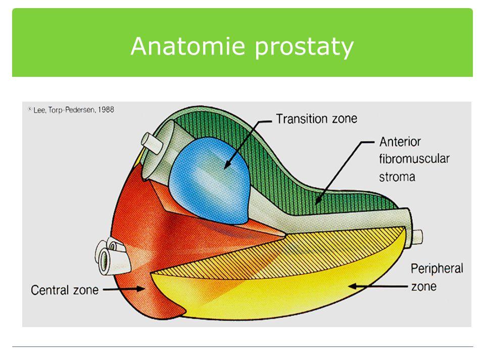 Patofyziologie BHP Obstrukce Mechanická obstrukce Intruse prostaty do lumen uretry nebo do hrdla měchýře= větší vyprazdňovaní odpor měchýře Dynamická obstrukce Prostatické stroma je dobře inervované adrenergními zásobením, míra autonomní stimulace udává tonus prostatické uretry