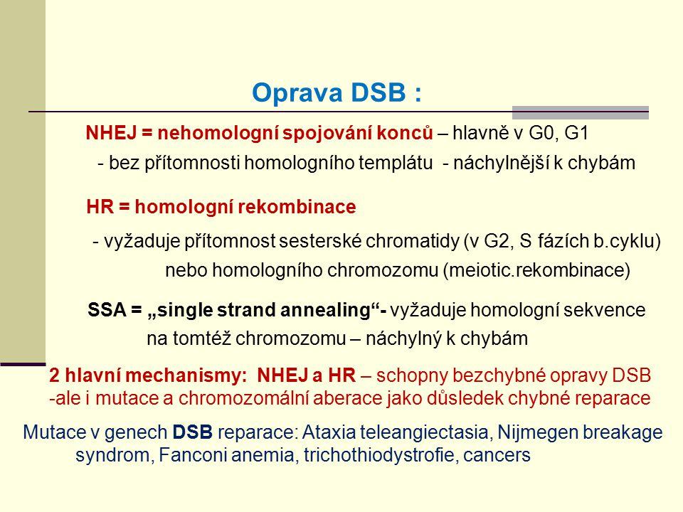 Oprava DSB : NHEJ = nehomologní spojování konců – hlavně v G0, G1 - bez přítomnosti homologního templátu - náchylnější k chybám HR = homologní rekombi