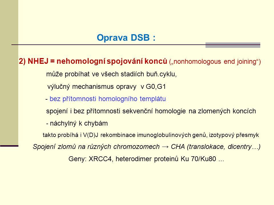 """2) NHEJ = nehomologní spojování konců (""""nonhomologous end joining"""") může probíhat ve všech stadiích buň.cyklu, výlučný mechanismus opravy v G0,G1 - be"""