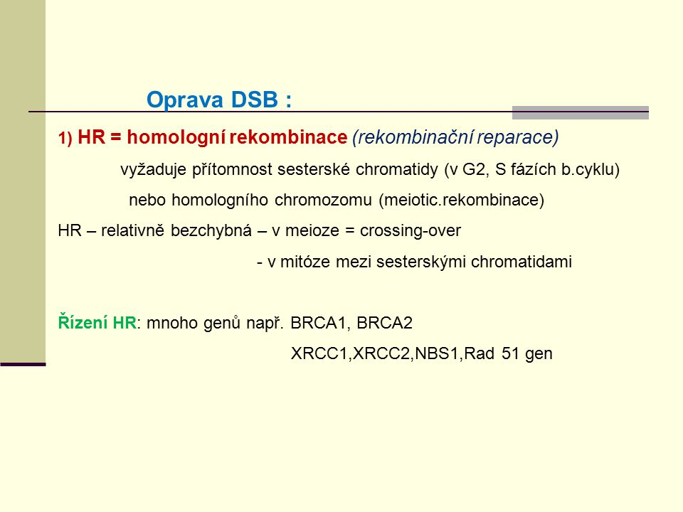1) HR = homologní rekombinace (rekombinační reparace) - vyžaduje přítomnost sesterské chromatidy (v G2, S fázích b.cyklu) nebo homologního chromozomu
