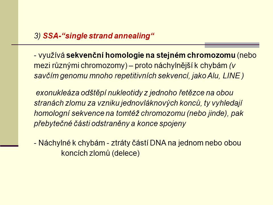 """3) SSA-""""single strand annealing"""" - využívá sekvenční homologie na stejném chromozomu (nebo mezi různými chromozomy) – proto náchylnější k chybám (v sa"""