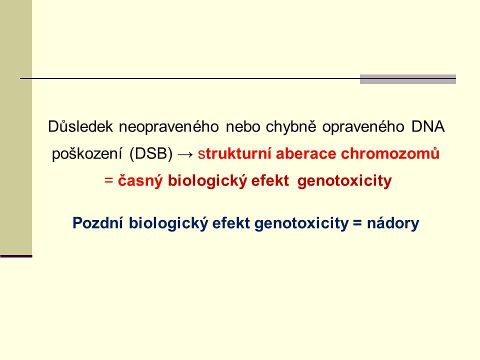 = Důsledek neopraveného nebo chybně opraveného DNA poškození (DSB) → strukturní aberace chromozomů = časný biologický efekt genotoxicity Pozdní biolog