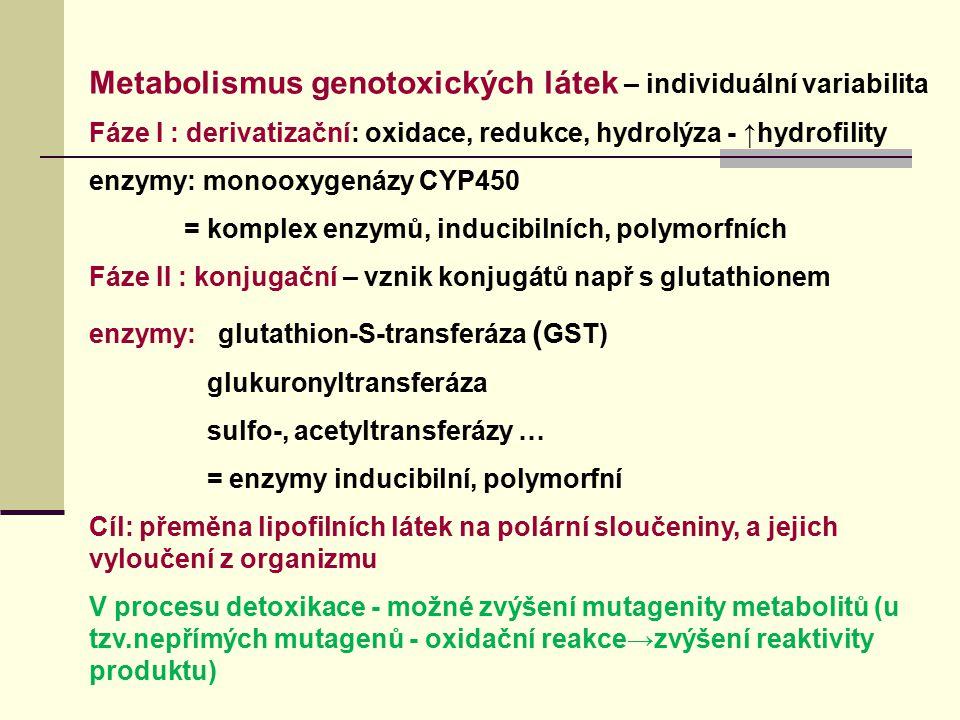 Metabolismus genotoxických látek – individuální variabilita Fáze I : derivatizační: oxidace, redukce, hydrolýza - ↑hydrofility enzymy: monooxygenázy C