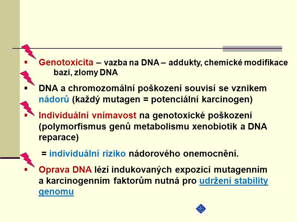  Genotoxicita – vazba na DNA – addukty, chemické modifikace bazí, zlomy DNA  DNA a chromozomální poškození souvisí se vznikem nádorů (každý mutagen