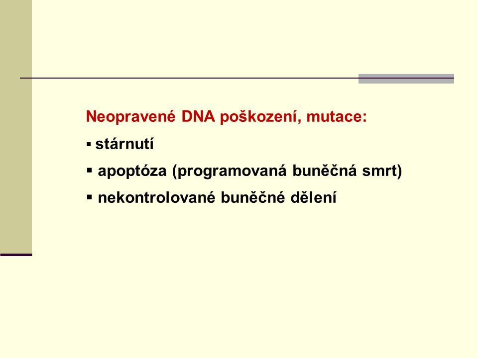 """Oprava DSB : NHEJ = nehomologní spojování konců – hlavně v G0, G1 - bez přítomnosti homologního templátu - náchylnější k chybám HR = homologní rekombinace - vyžaduje přítomnost sesterské chromatidy (v G2, S fázích b.cyklu) nebo homologního chromozomu (meiotic.rekombinace) SSA = """"single strand annealing - vyžaduje homologní sekvence na tomtéž chromozomu – náchylný k chybám 2 hlavní mechanismy: NHEJ a HR – schopny bezchybné opravy DSB -ale i mutace a chromozomální aberace jako důsledek chybné reparace Mutace v genech DSB reparace: Ataxia teleangiectasia, Nijmegen breakage syndrom, Fanconi anemia, trichothiodystrofie, cancers"""