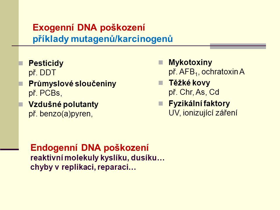 DNA poškození Exogenní faktory:  UV záření: - dimery = kovalentní vazby pyrimidinů (C,T) - volné radikály  Ionizující záření - volné radikály - jedno a dvouvláknové zlomy DNA vláken  Chemické látky - alkylace bazí - addukty (prokarcinogeny metabolizovány na reaktivní molekuly) Chemicky modifikované báze mají odlišné párovací schopnosti při replikaci