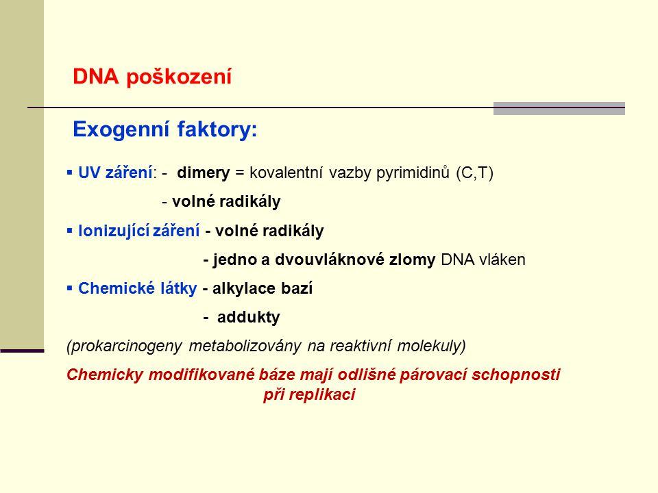 DNA poškození Exogenní faktory:  UV záření: - dimery = kovalentní vazby pyrimidinů (C,T) - volné radikály  Ionizující záření - volné radikály - jedn