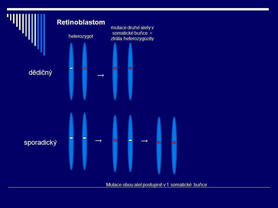 Retinoblastom dědičný sporadický heterozygot mutace druhé alely v somatické buňce = ztráta heterozygozity Mutace obou alel postupně v 1 somatické buňc