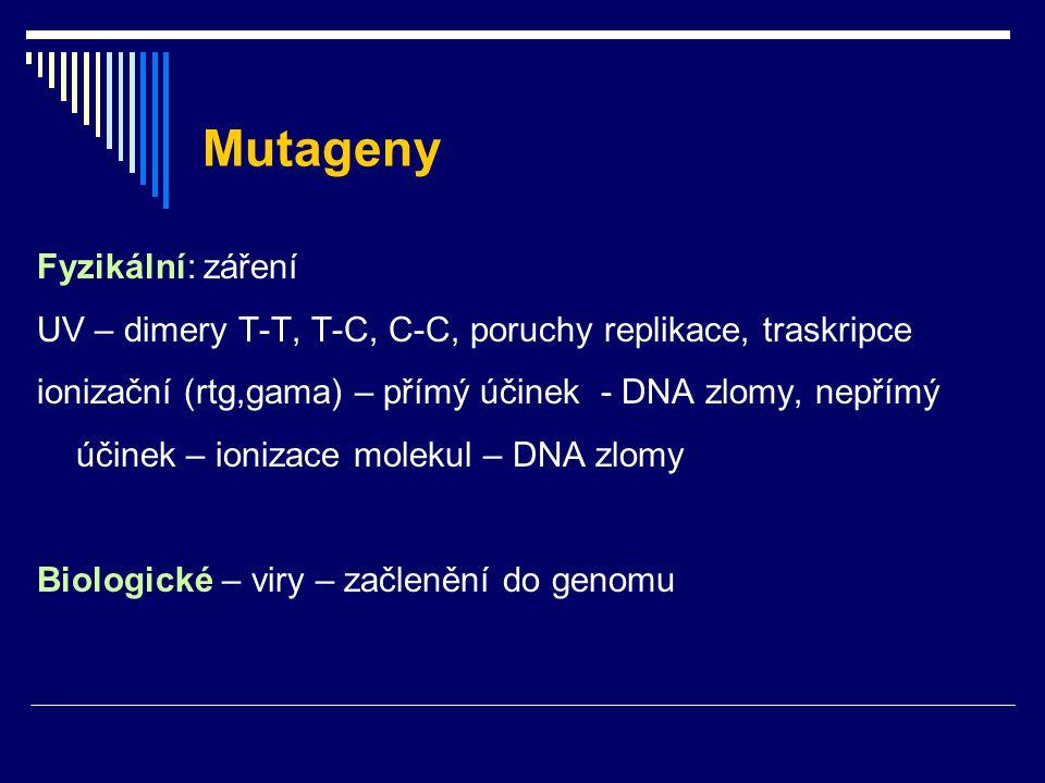 Mutageny Fyzikální: záření UV – dimery T-T, T-C, C-C, poruchy replikace, traskripce ionizační (rtg,gama) – přímý účinek - DNA zlomy, nepřímý účinek –