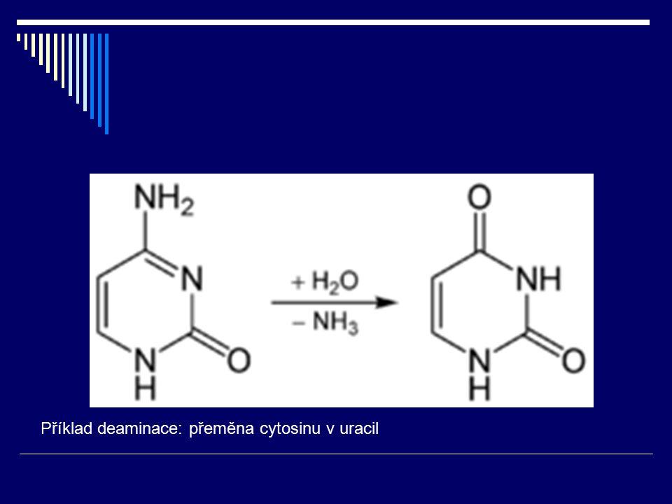 Příklad deaminace: přeměna cytosinu v uracil