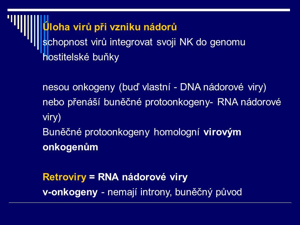 Úloha virů při vzniku nádorů schopnost virů integrovat svoji NK do genomu hostitelské buňky nesou onkogeny (buď vlastní - DNA nádorové viry) nebo přen