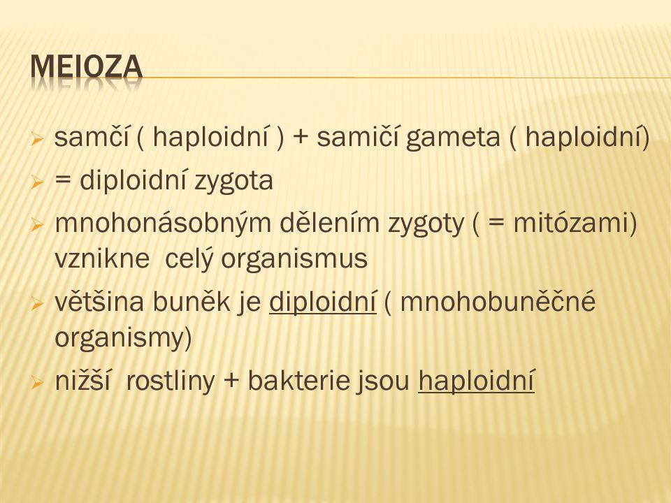  samčí ( haploidní ) + samičí gameta ( haploidní)  = diploidní zygota  mnohonásobným dělením zygoty ( = mitózami) vznikne celý organismus  většina buněk je diploidní ( mnohobuněčné organismy)  nižší rostliny + bakterie jsou haploidní