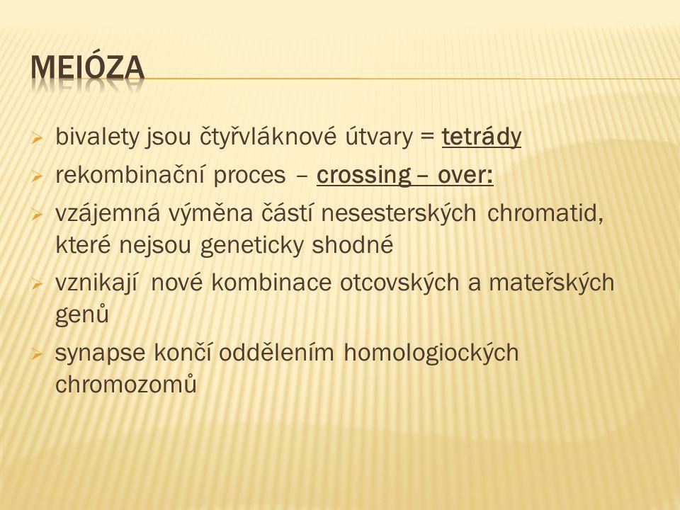  bivalety jsou čtyřvláknové útvary = tetrády  rekombinační proces – crossing – over:  vzájemná výměna částí nesesterských chromatid, které nejsou geneticky shodné  vznikají nové kombinace otcovských a mateřských genů  synapse končí oddělením homologiockých chromozomů