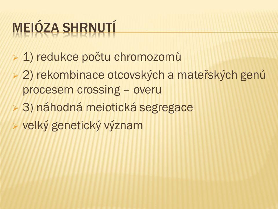  1) redukce počtu chromozomů  2) rekombinace otcovských a mateřských genů procesem crossing – overu  3) náhodná meiotická segregace  velký genetický význam