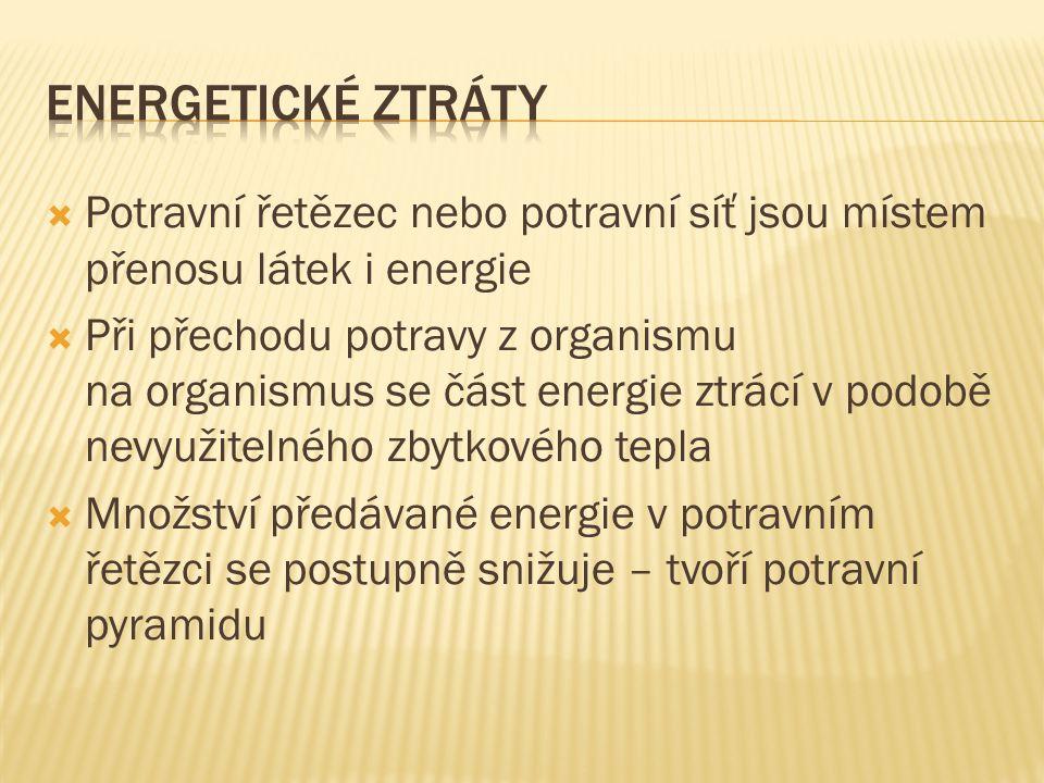  Potravní řetězec nebo potravní síť jsou místem přenosu látek i energie  Při přechodu potravy z organismu na organismus se část energie ztrácí v pod