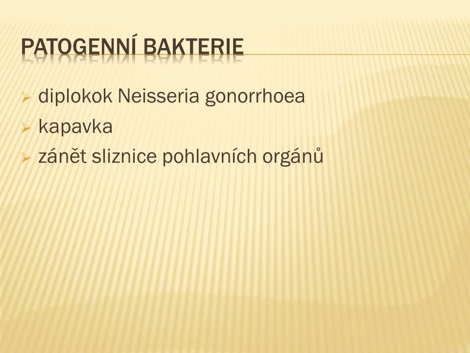  diplokok Neisseria gonorrhoea  kapavka  zánět sliznice pohlavních orgánů
