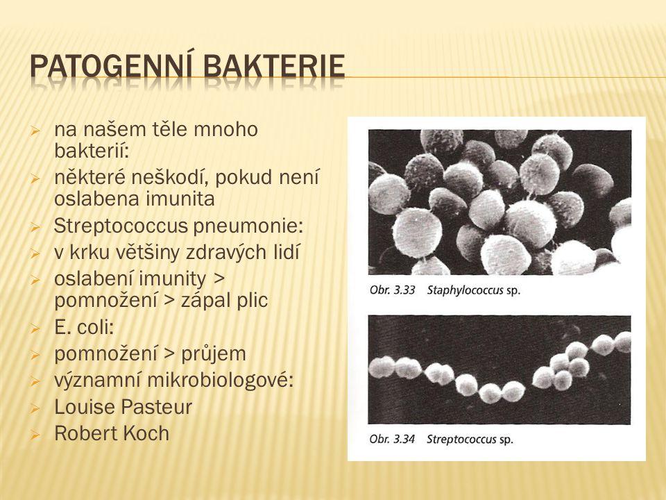  na našem těle mnoho bakterií:  některé neškodí, pokud není oslabena imunita  Streptococcus pneumonie:  v krku většiny zdravých lidí  oslabení imunity > pomnožení > zápal plic  E.