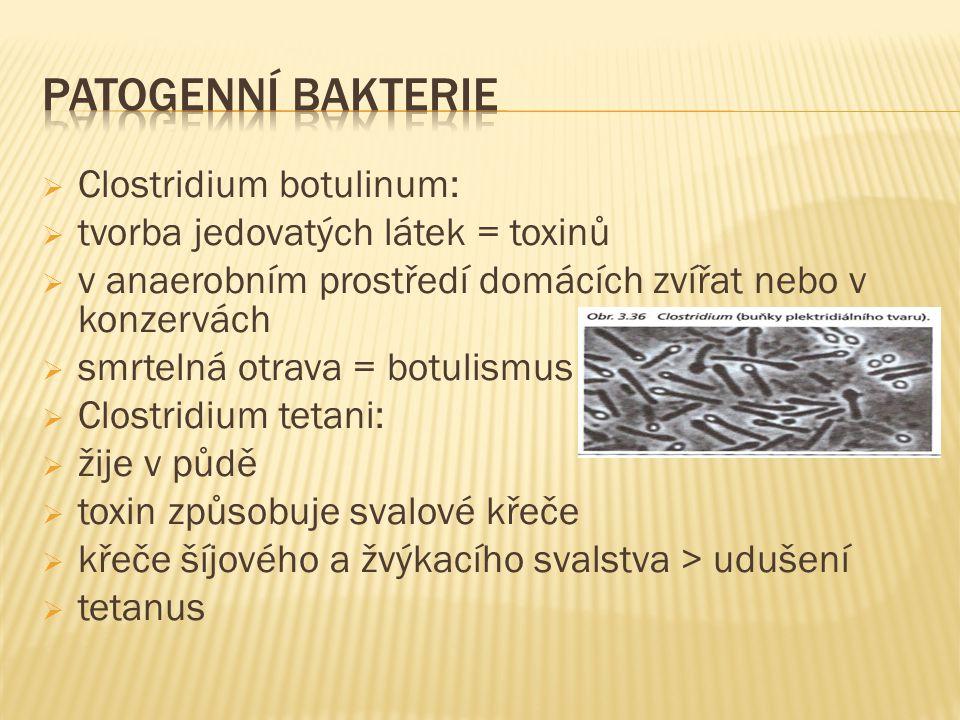  Clostridium botulinum:  tvorba jedovatých látek = toxinů  v anaerobním prostředí domácích zvířat nebo v konzervách  smrtelná otrava = botulismus  Clostridium tetani:  žije v půdě  toxin způsobuje svalové křeče  křeče šíjového a žvýkacího svalstva > udušení  tetanus