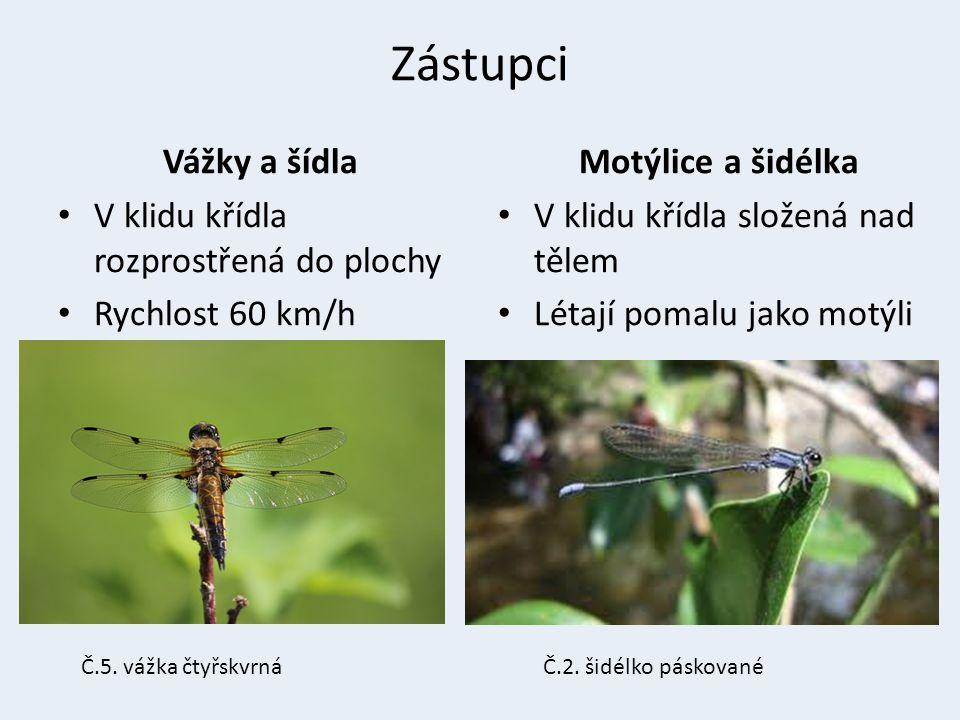 Č.3. vážka plavá Č.4. motýlice leskláČ.5. šídlo rákosní atlas vážek