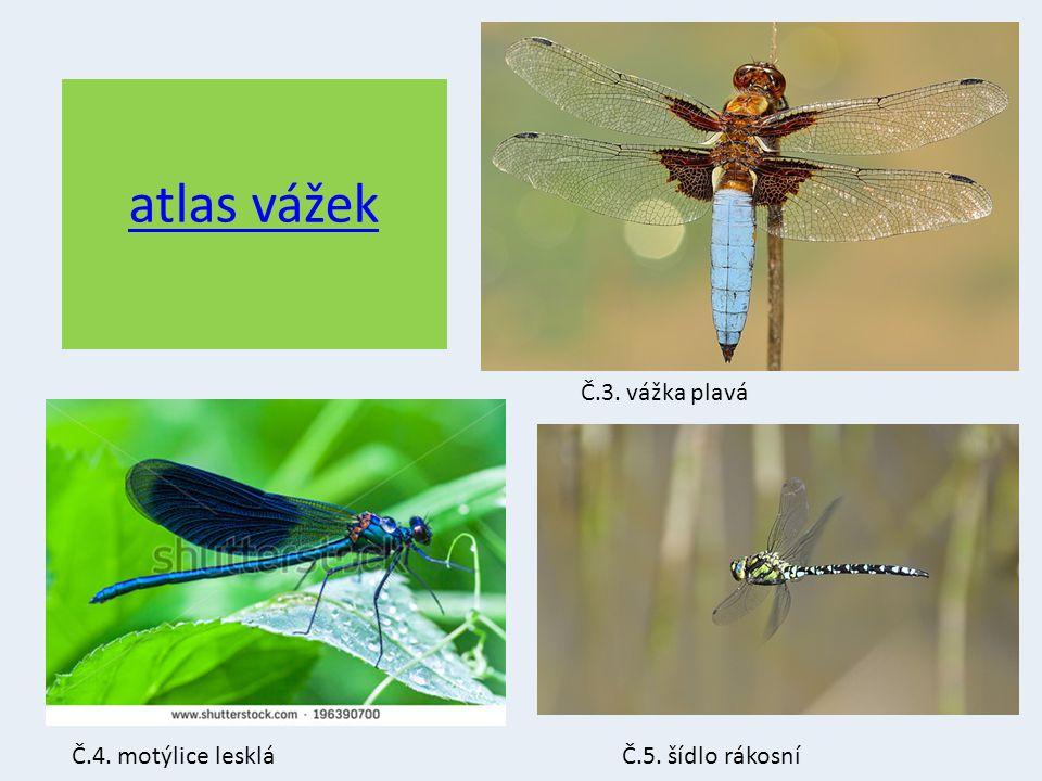 Kudlanky Manželský kanibalismus Teplo Napodobuje části rostlin Jediný druh v ČR – Kudlanka nábožná Č.12