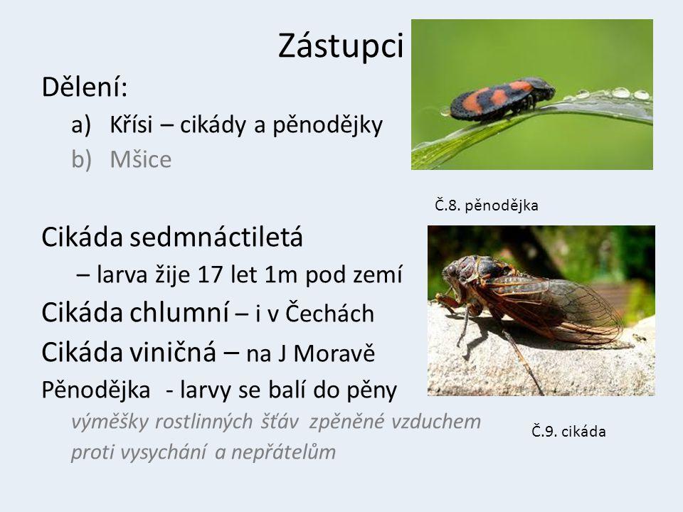 b) Mšice mšice – Sají rostlinnou šťávu – nadbytečnou jedí mravenci – Jejich nepřítel larvy slunéčka sedmitečného a zlatooček Vlnatka krvavá – parazituje na jabloních Puklice švestková Molice skleníková Č.7