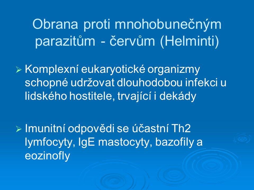 Obrana proti mnohobunečným parazitům - červům (Helminti)   Komplexní eukaryotické organizmy schopné udržovat dlouhodobou infekci u lidského hostitel