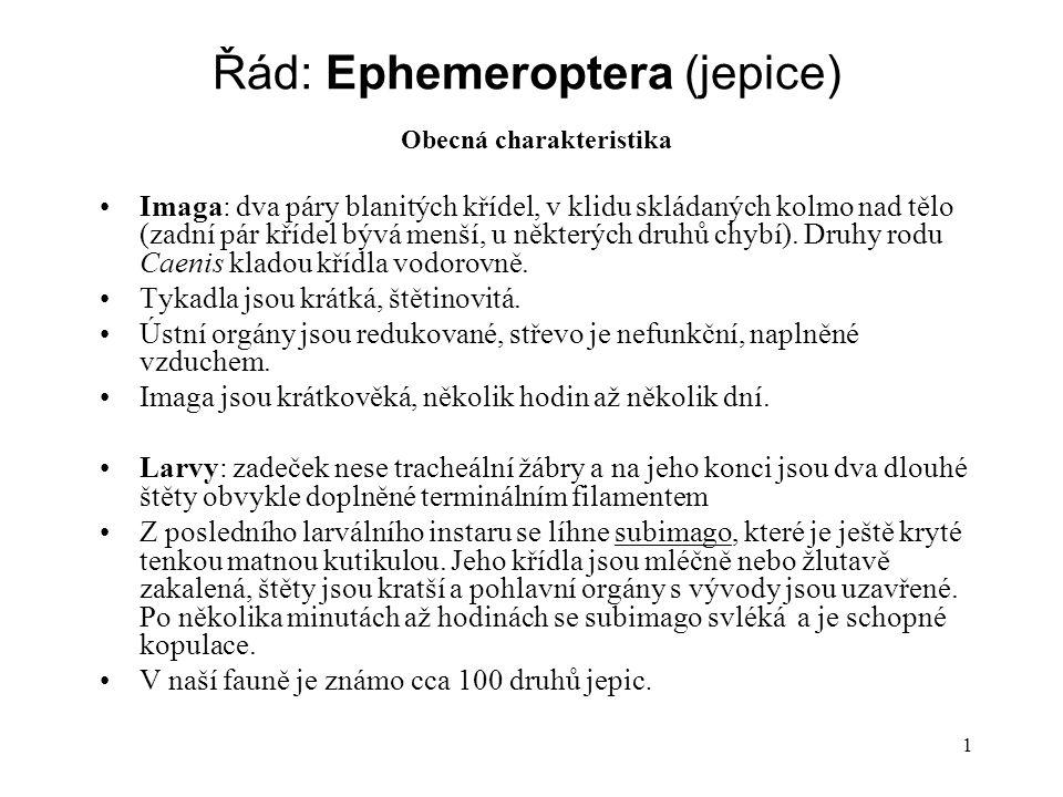 1 Řád: Ephemeroptera (jepice) Obecná charakteristika Imaga: dva páry blanitých křídel, v klidu skládaných kolmo nad tělo (zadní pár křídel bývá menší, u některých druhů chybí).