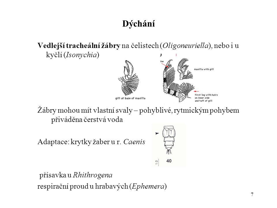 7 Dýchání Vedlejší tracheální žábry na čelistech (Oligoneuriella), nebo i u kyčlí (Isonychia) Žábry mohou mít vlastní svaly – pohyblivé, rytmickým pohybem přiváděna čerstvá voda Adaptace: krytky žaber u r.